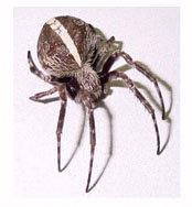 Orb spider termite treatment cabarita beach