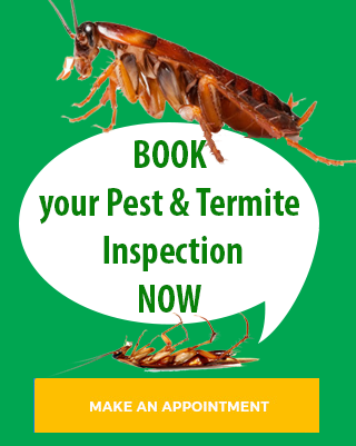 pest inspection cabarita beach